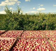 烟台市苹果园太阳能杀虫灯项